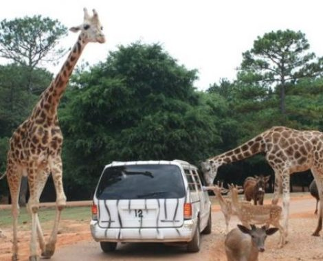 wildlife safari